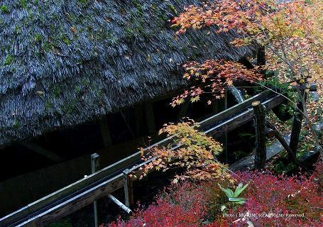 高千穂峡の水車小屋と紅葉 05