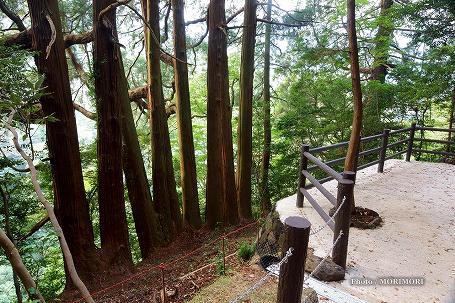 天岩戸神社 東本宮 七本杉