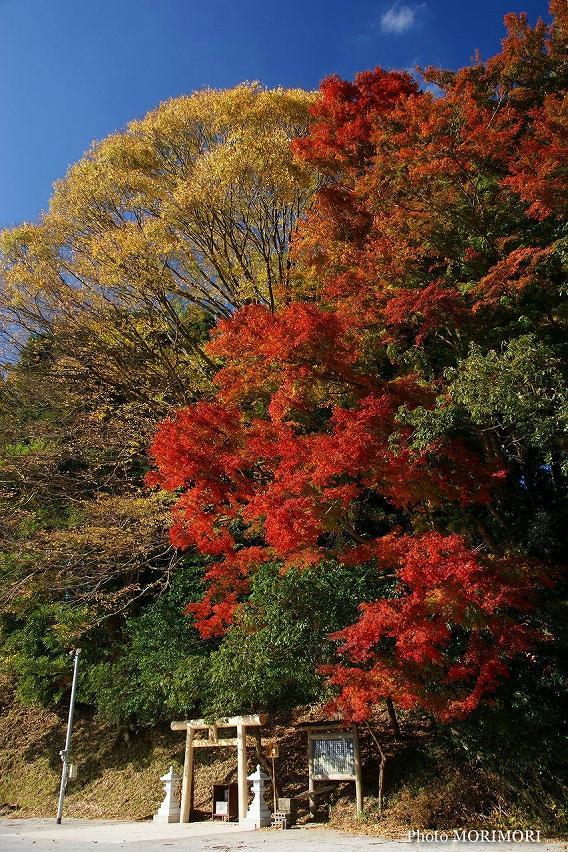 吾平山稜の紅葉