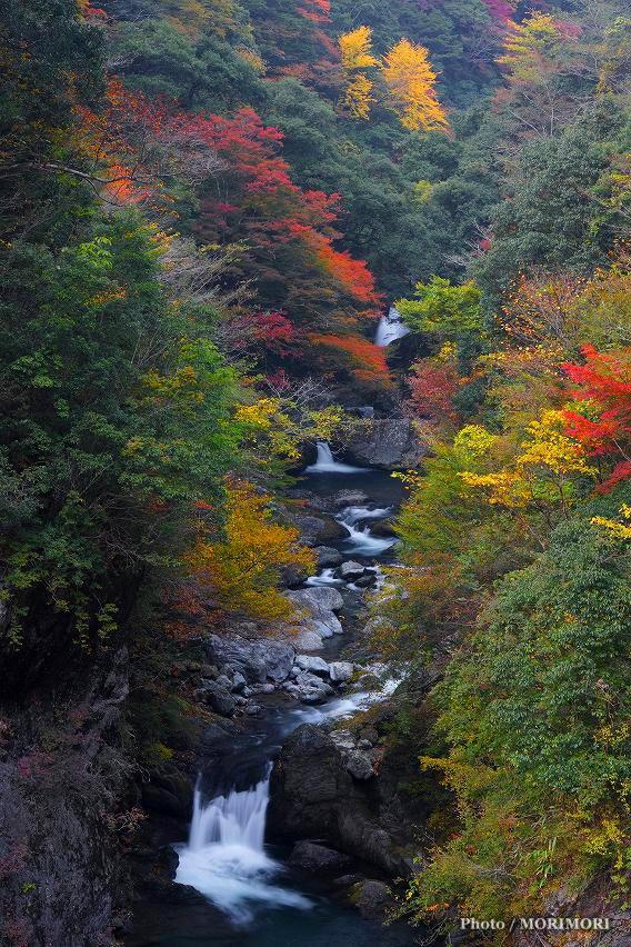 仲塔渓谷の紅葉
