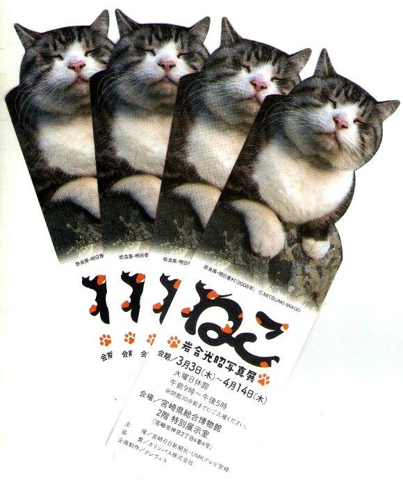 岩合光昭写真展「ねこ」チケット