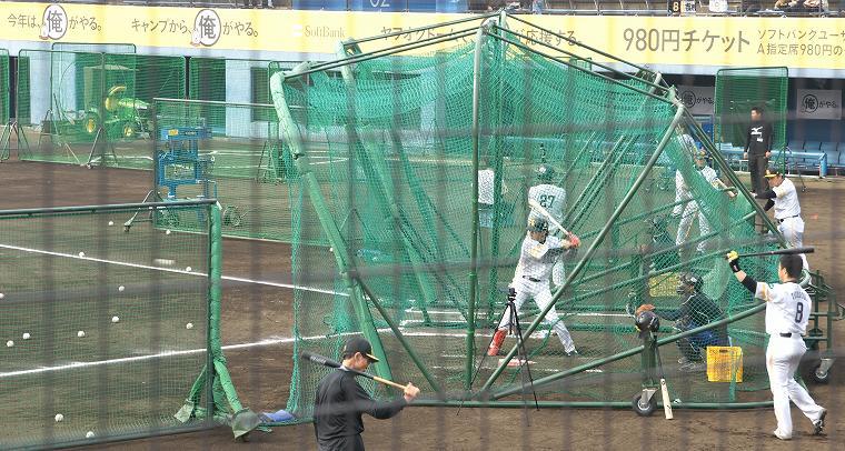 2014年 福岡ソフトバンクホークスキャンプ