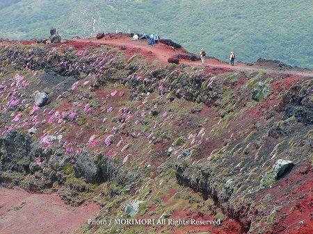 霧島連山 御鉢火口縁の登山道とミヤマキリシマ