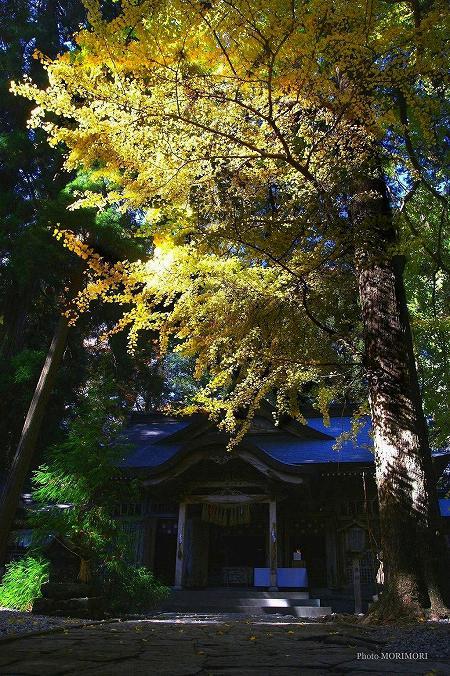 高千穂神社 1110line02.jpg