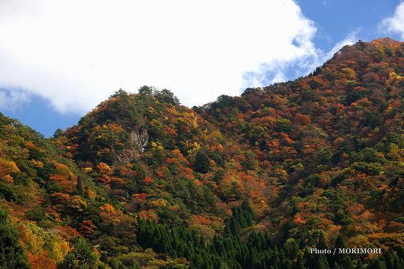 参道から見た周辺の山々の紅葉