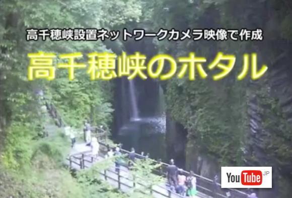 高千穂峡のホタル Youtube